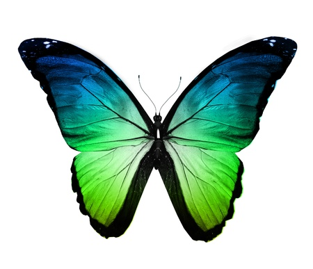 Blue green butterfly , isolated on white