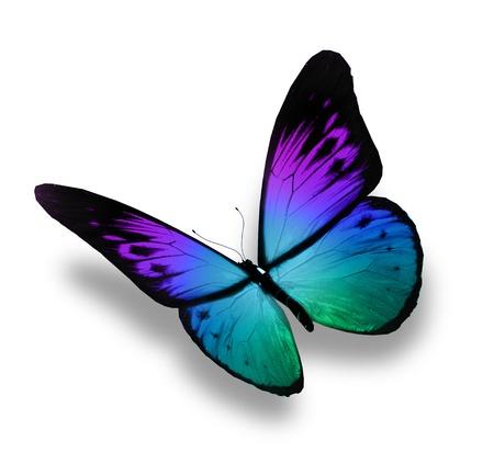 mariposa azul: Mariposa azul de vuelo, aislado en fondo blanco Foto de archivo