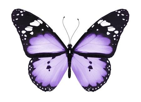 papillon rose: Papillon bleu, isolé sur blanc
