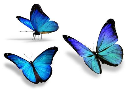 mariposa azul: Tres mariposa azul, aislados en fondo blanco Foto de archivo