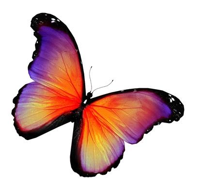 Violette gele vlinder op een witte achtergrond Stockfoto