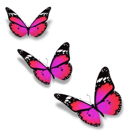 papillon rose: Trois violette papillon, isolé sur fond blanc