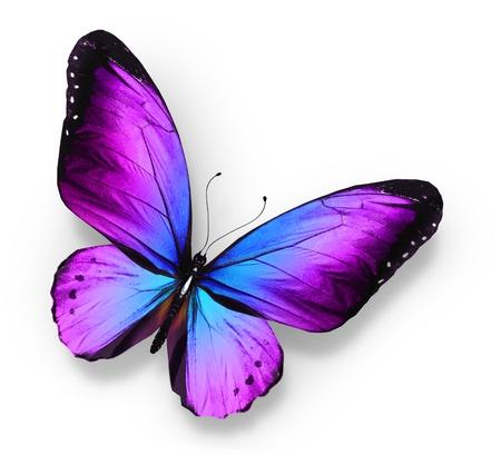 Fioletowy niebieski motyl, na bia?ym tle