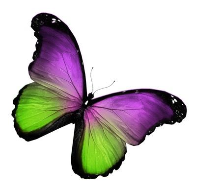 Groen violet vlinder op witte achtergrond