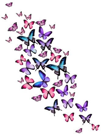 black and blue butterfly flying: Many different butterflies, isolated on white background Stock Photo
