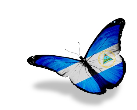 Nicaragua flag butterfly flying, isolated on white background photo