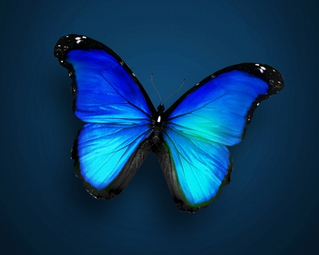 Blue butterfly on dark blue background photo