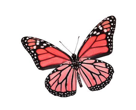 papillon rose: Papillon rouge, isolé sur blanc