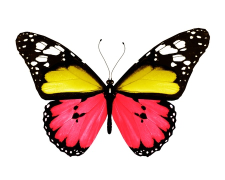 Red yellow butterfly, isolated on white background photo