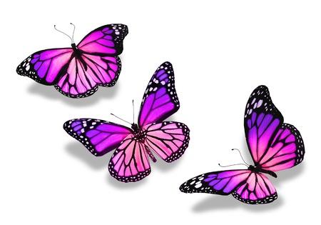 papillon rose: Trois papillons bleus violets, isol� sur fond blanc Banque d'images