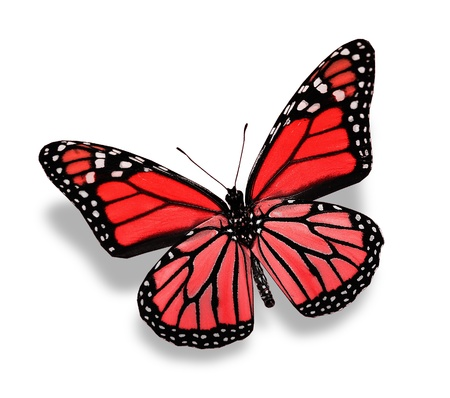 free background: Red butterfly , isolated on white