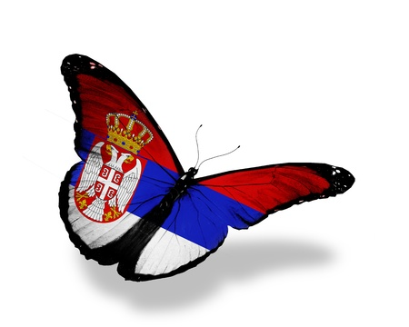 Serbia flag butterfly flying, isolated on white background Stock Photo - 16513618