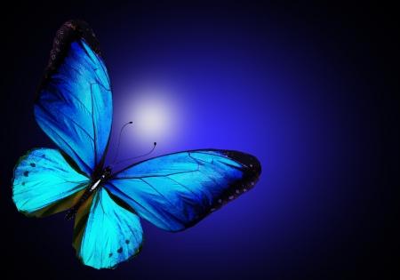 aquamarin: Blauer Schmetterling auf dunkelblauem Hintergrund