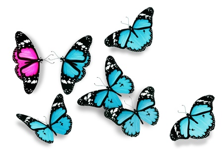 rivals rival rivalry season: One pink and many blue butterflies, as concept of relations between men and women Stock Photo
