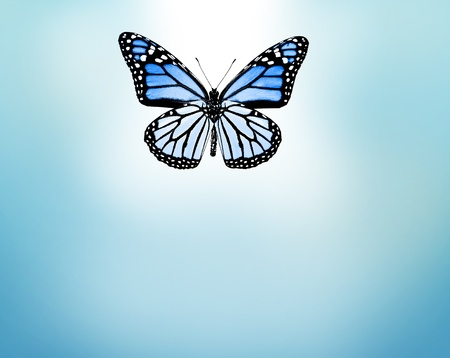 black gods: Blue butterfly , isolated on blue background