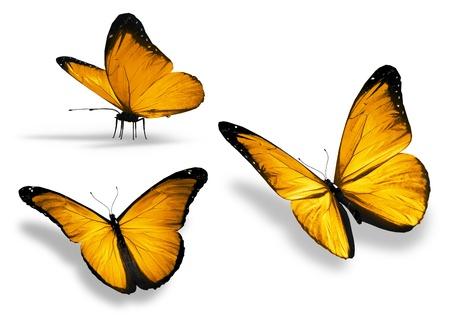 mariposa azul: Tres mariposa amarilla, aislados en fondo blanco Foto de archivo
