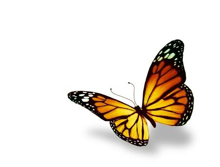mariposas volando: Orange mariposa, aisladas sobre fondo blanco