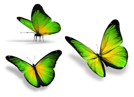 흰 배경에 고립 된 세 개의 노란색, 녹색, 나비,
