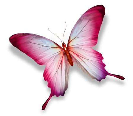 papillon: Papillon rose, isolé sur blanc
