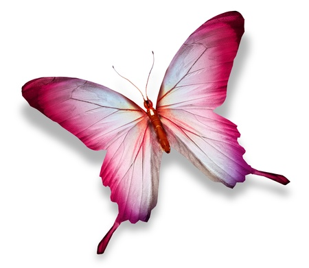 Pink butterfly , isolated on white