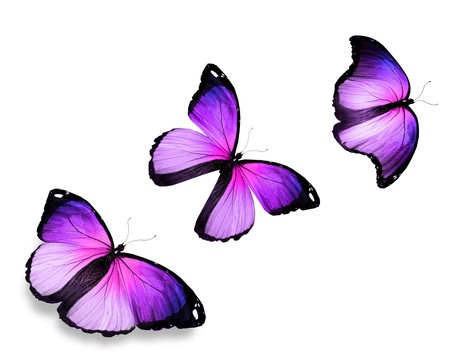 Three violet butterfly, isolated on white background photo