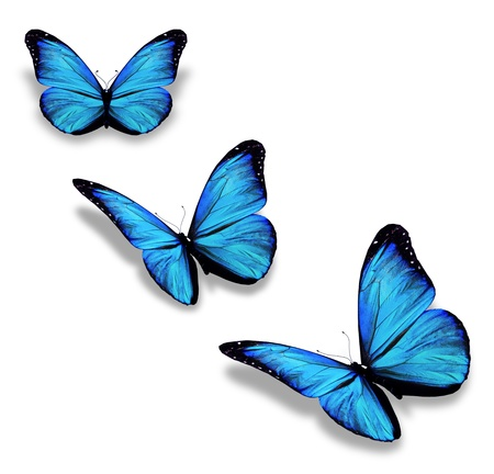 3 つの青い蝶は、白で隔離