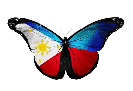 Philippines flag butterfly, isolated on white background photo