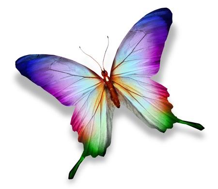 Mariposa colorida, aislada en blanco