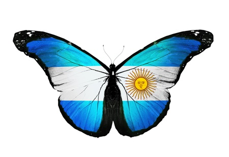 Argentina flag butterfly, isolated on white background photo