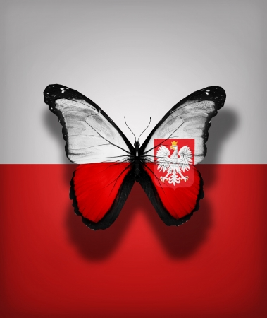 Polish flag butterfly, isolated on flag background Stock Photo - 16999852