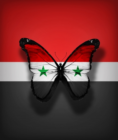 Syrian flag butterfly, isolated on flag background photo
