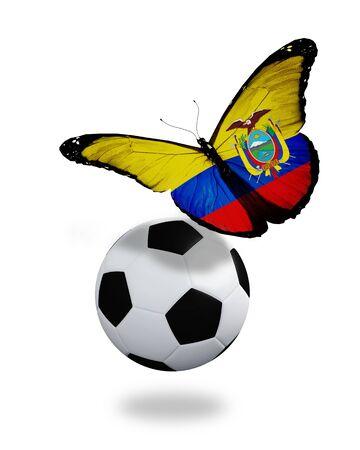 ecuador: Concept - butterfly with Ecuador flag flying near the ball, like football team playing   Stock Photo
