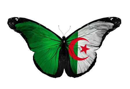 Algeria flag butterfly flying, isolated on white background photo