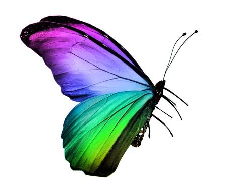 흰색에 고립 된 다채로운 나비,