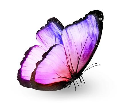 ピンクの蝶は、白で隔離
