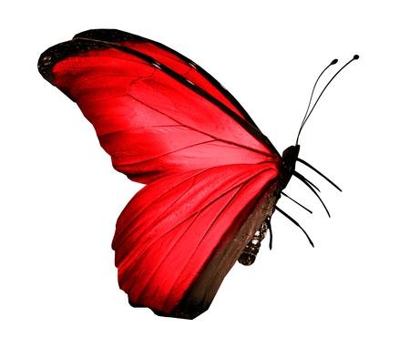 흰색에 고립 된 빨간색 나비,