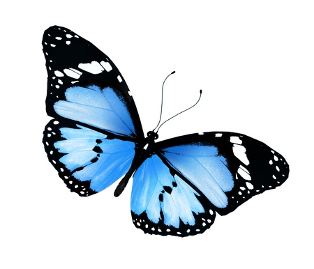 Blue butterfly , isolated on white Stock Photo - 17380627