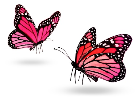 pink butterfly: Two pink butterflies, isolated on white background Stock Photo