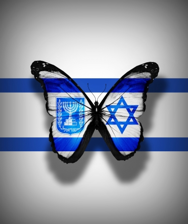 Israeli flag butterfly, isolated on flag background Stock Photo - 17540747