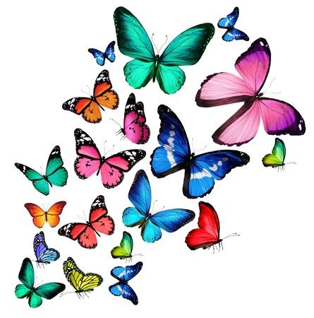 격리 된 흰색 배경에 많은 색상의 나비, 스톡 콘텐츠