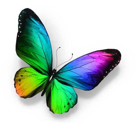 butterflies flying: Color de la mariposa, aislado en blanco Foto de archivo