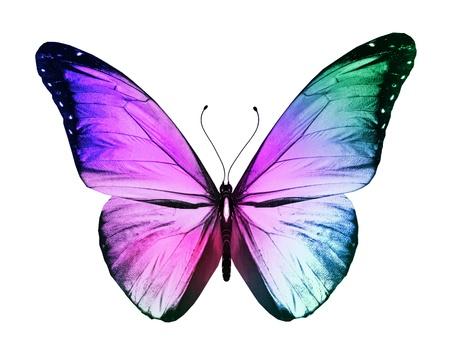 Kleur vlinder, geïsoleerd op witte achtergrond Stockfoto
