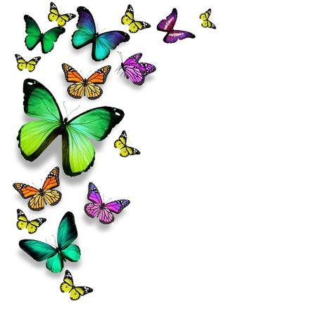 격리 된 흰색 배경에 색 나비,