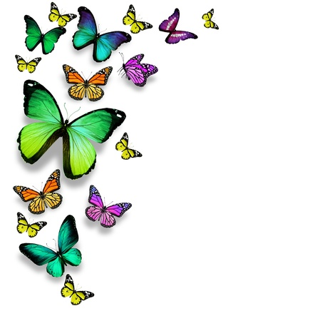 butterflies flying: Farfalle di colore, isolato su sfondo bianco