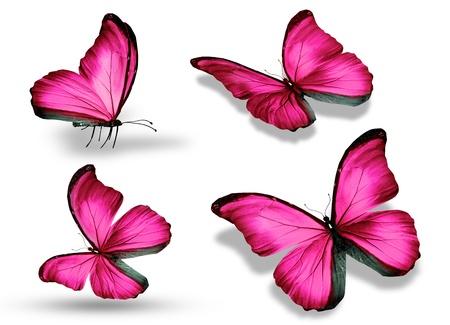 흰색 배경에 절연 된 4 개의 분홍색 나비,