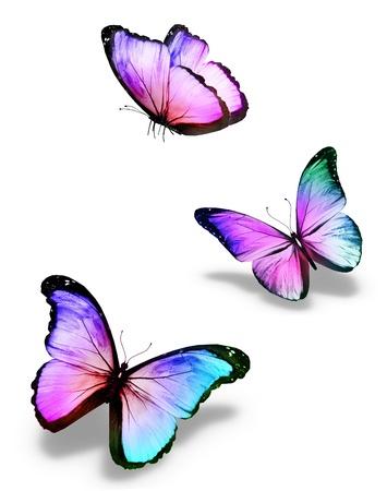 Trois papillons de couleur, isolé sur blanc