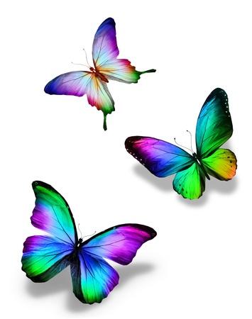 3 色の蝶、白で隔離されます。 写真素材