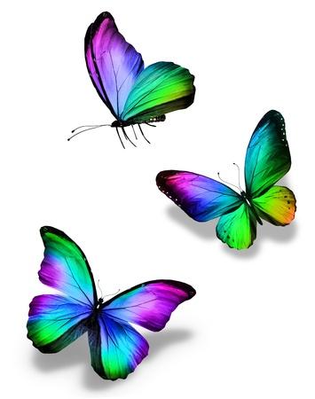 rainbow: Trois papillons de couleur, isolé sur blanc