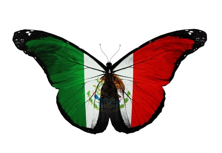 Mexican flag butterfly flying, isolated on white background Stock Photo