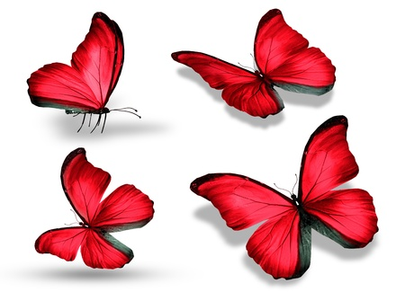 mariposas volando: Cuatro mariposa roja, aislados en fondo blanco